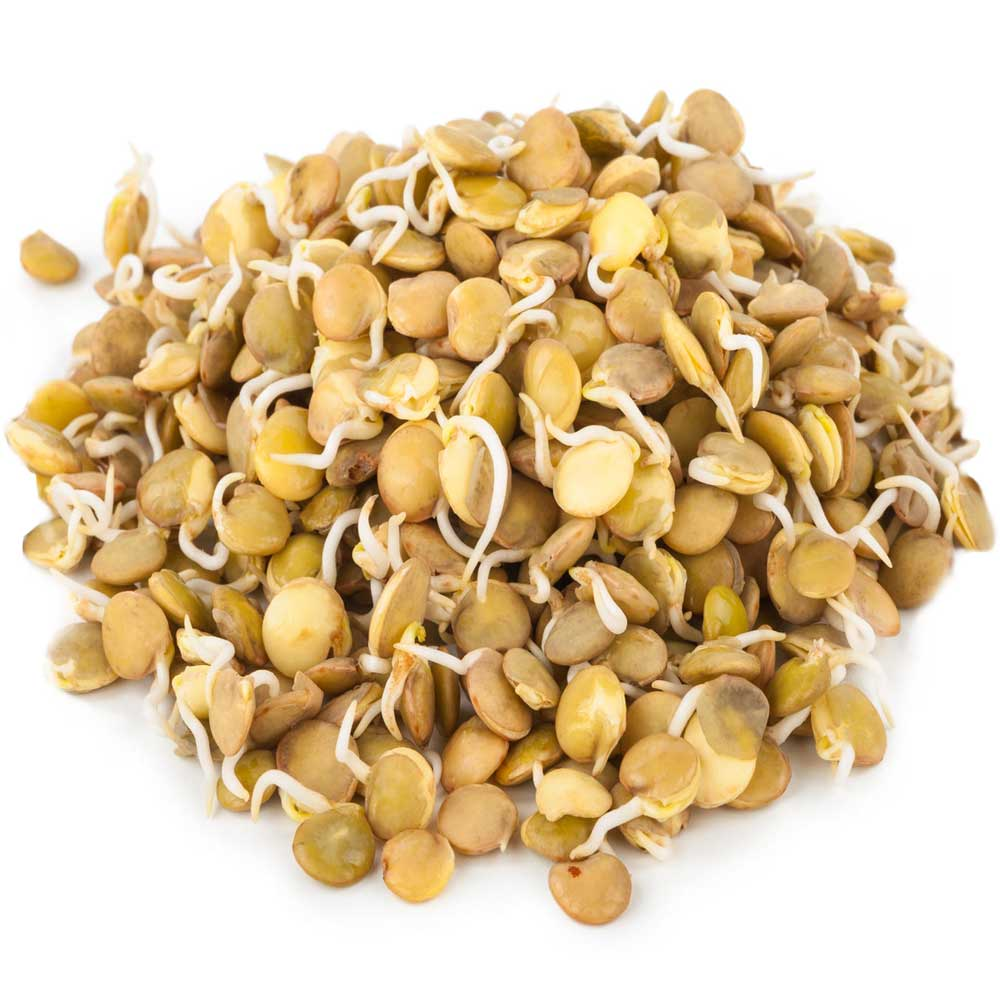 Home Grown Bulk Sprouted Lentils